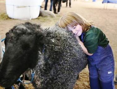 羊オークション